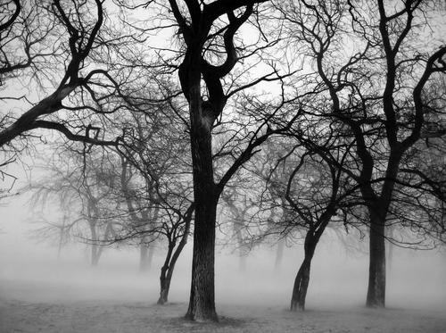 le brouillard2