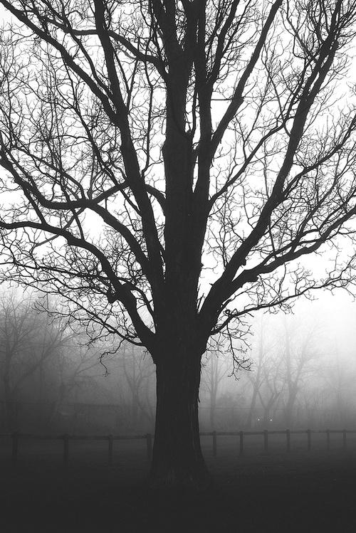 le brouillard3